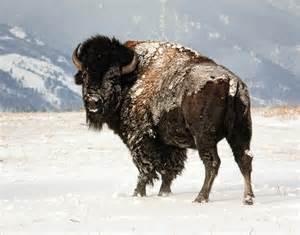2011_Drudge_Wyoming